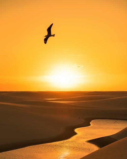 일몰 동안 해변 위를 나는 새