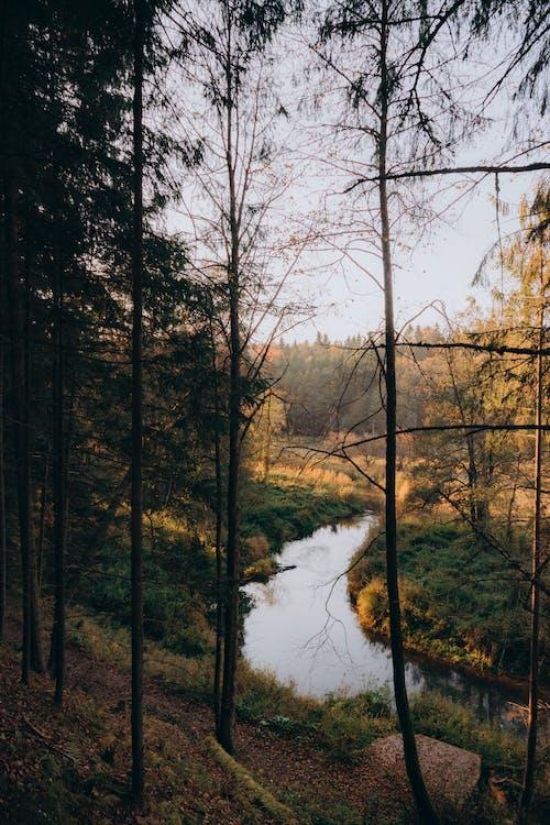 Fotos de stock gratuitas de agua, árbol, belleza en la naturaleza