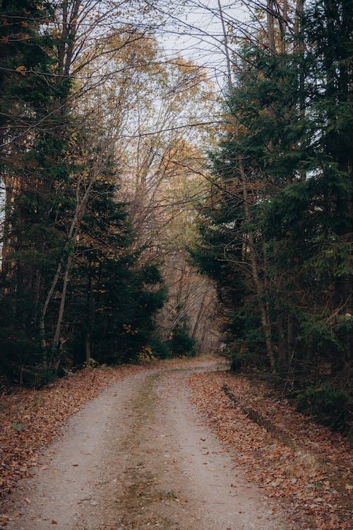 Fotos de stock gratuitas de amanecer, árbol, caer
