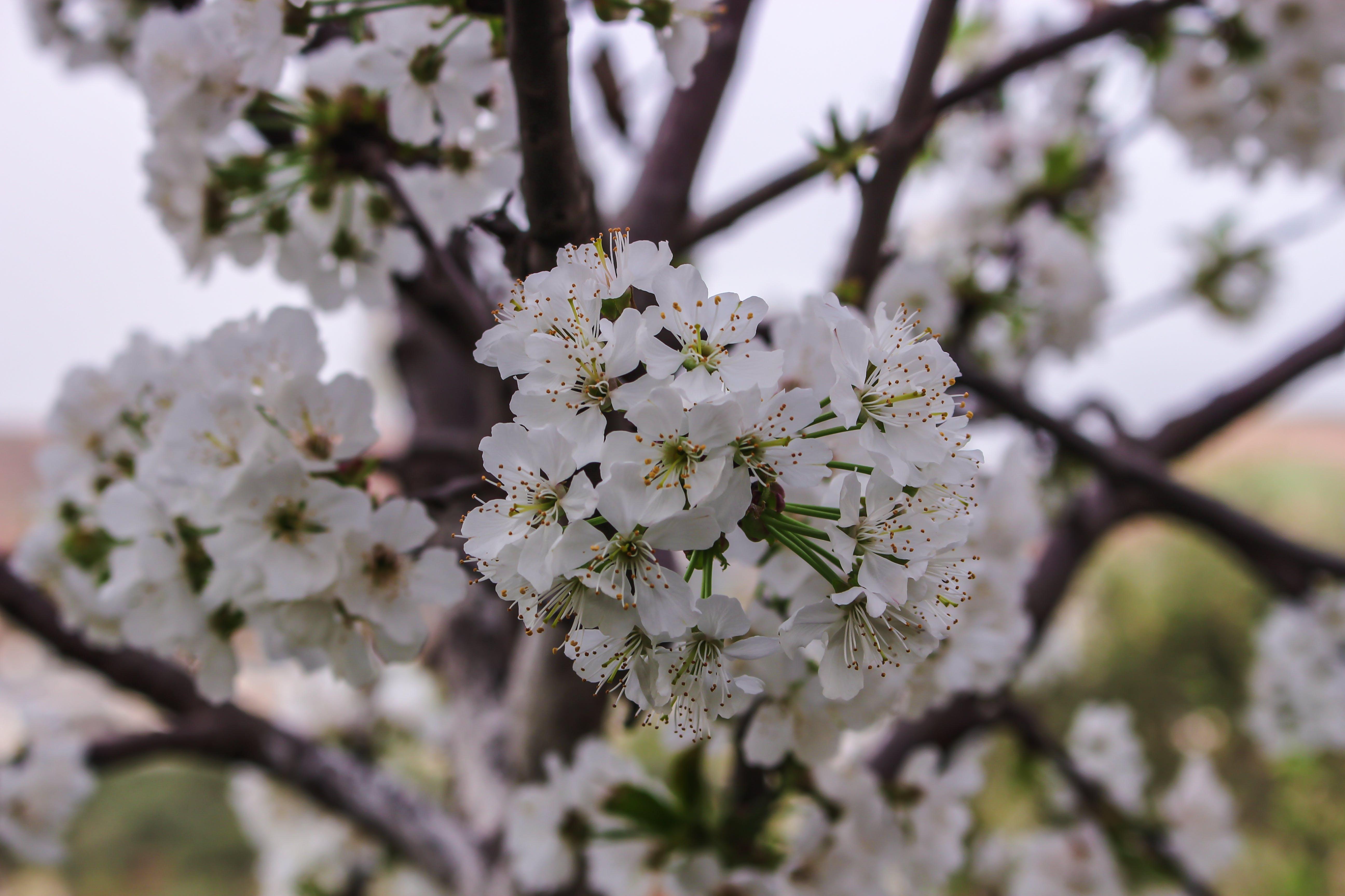 Closeup Photo of White Petaled Flowers