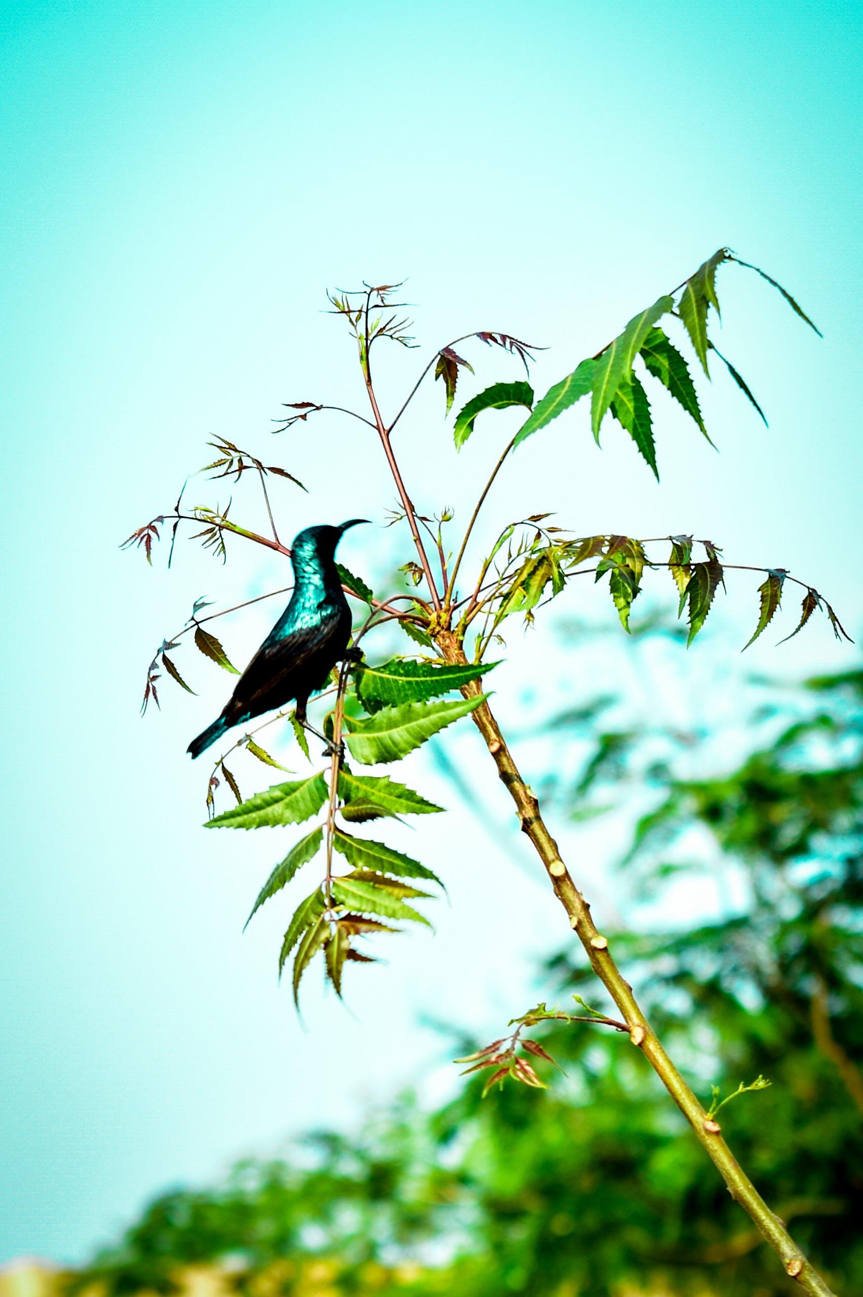 Free stock photo of #bird, #cukoo