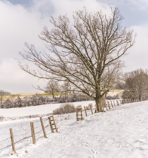 Kostenloses Stock Foto zu äste, bäume, eis, eisig
