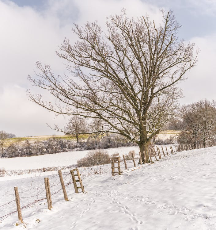 Bare Tree With Ground Covered by Snow