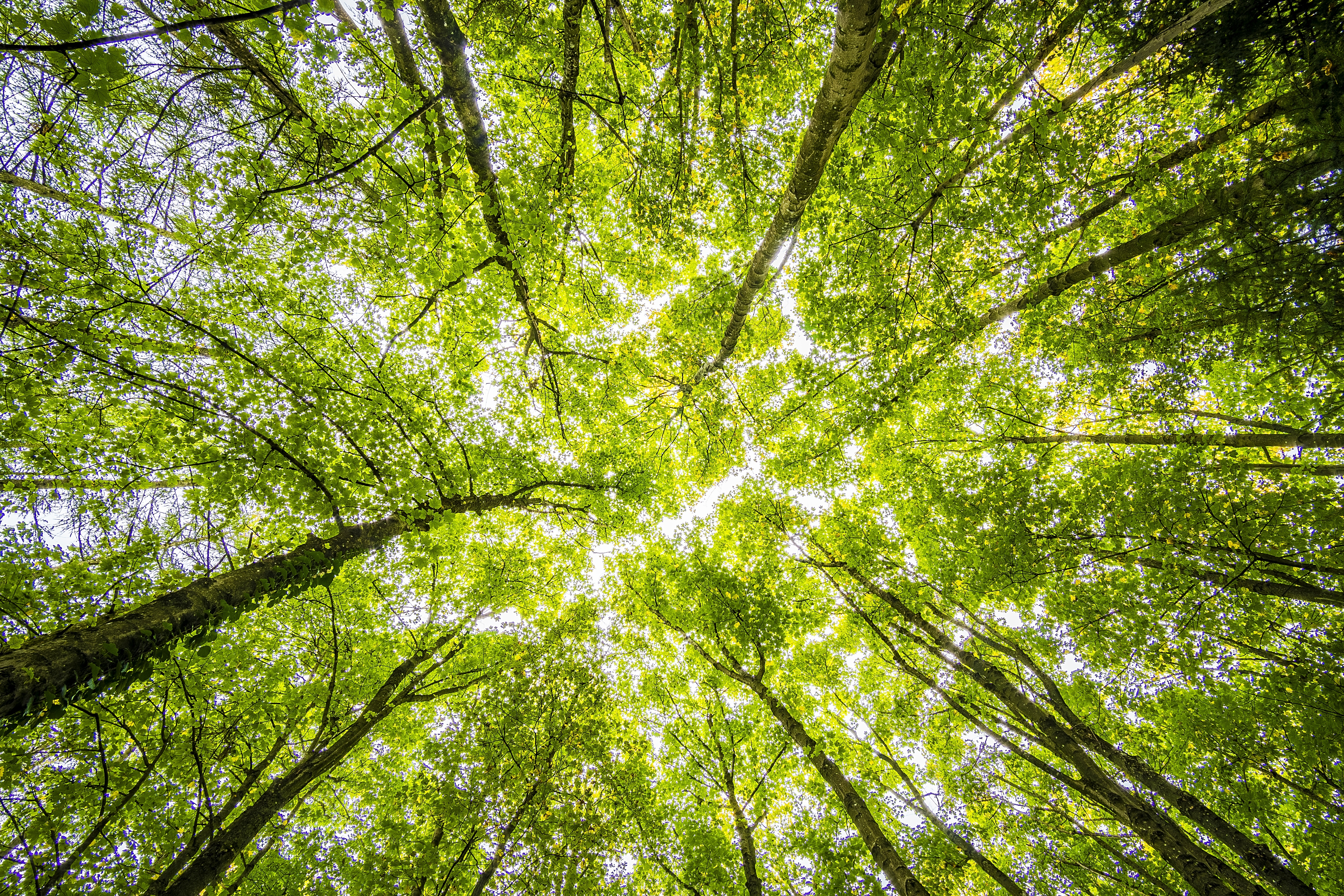 Worms Eyeview of Green Trees · Free Stock Photo