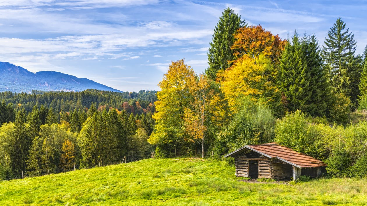 Brown Wooden Cottage Near Forest