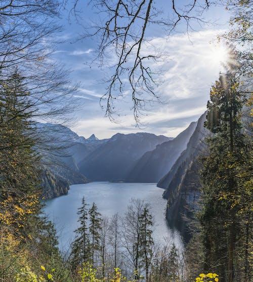 Foto d'estoc gratuïta de aigua, alt, amb boira, arbres