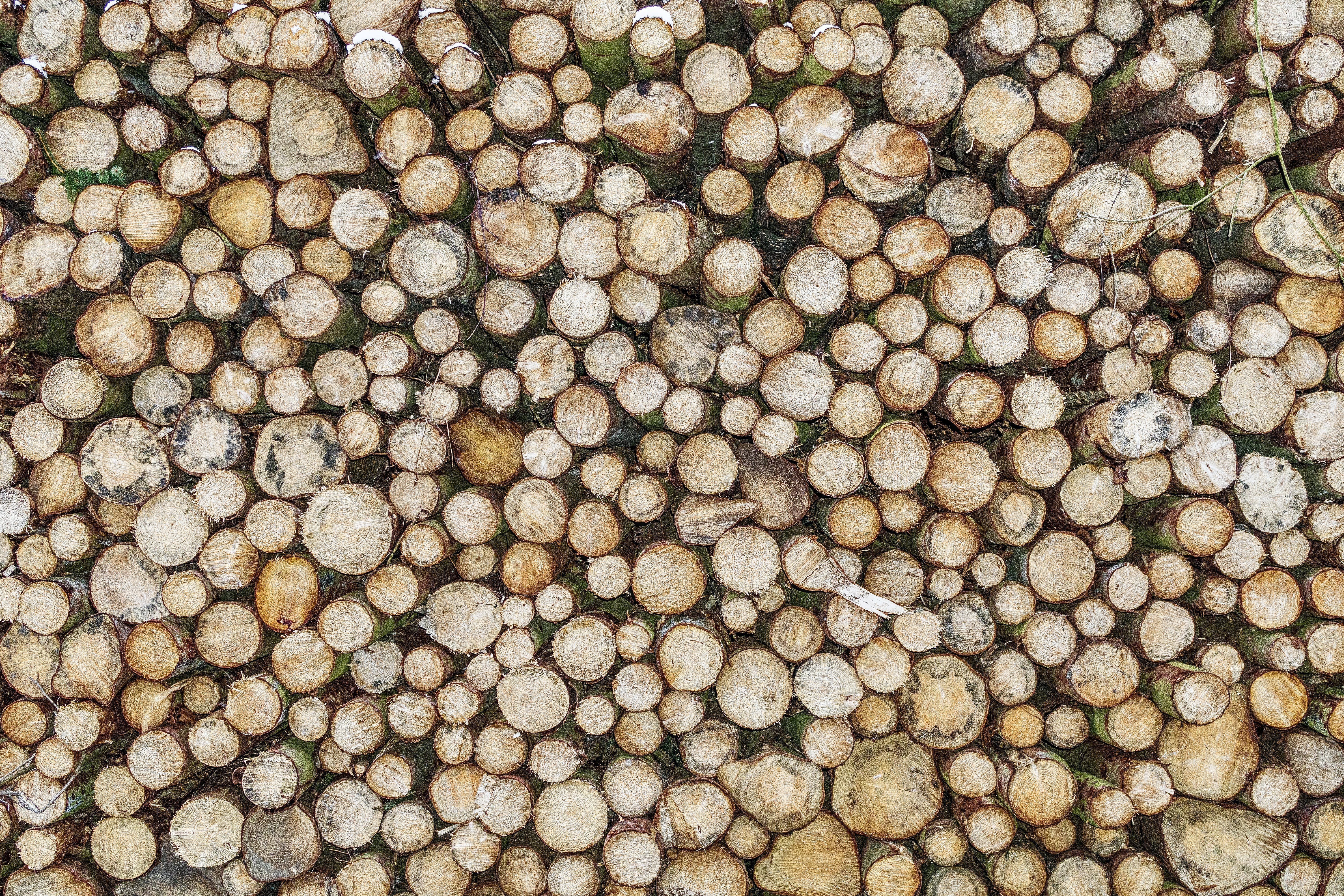 Free stock photo of wood, pattern, texture, trees