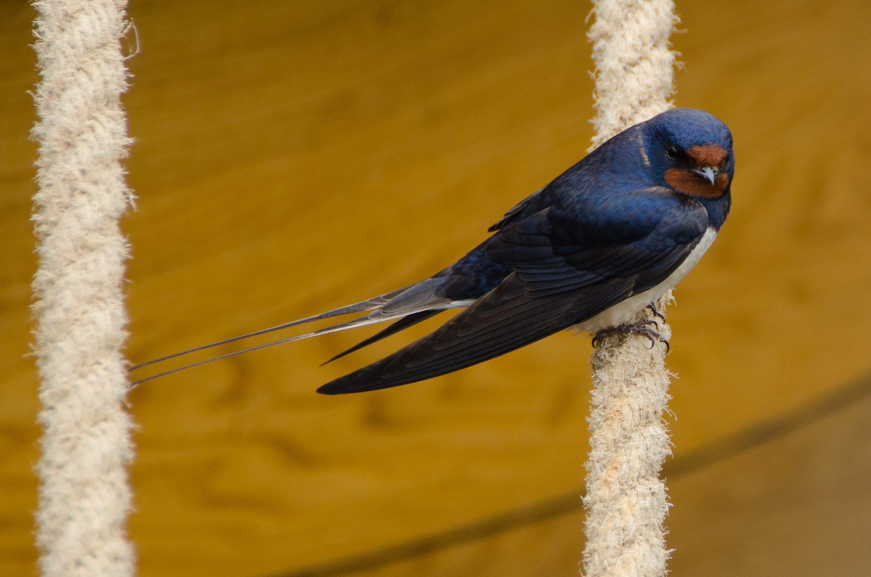 Kostenloses Stock Foto zu natur, vogel, tier, gucken