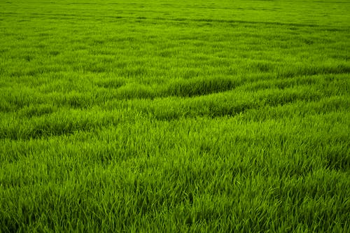 Free stock photo of close, frisch, grass, grass meadow