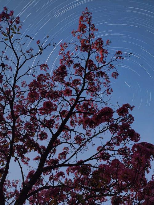 Foto profissional grátis de ao ar livre, árvore, árvores