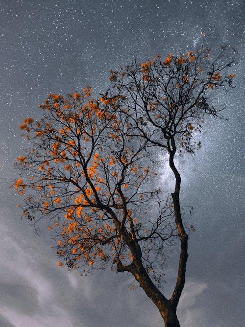 Foto profissional grátis de árvore, brilhante, céu com cores intensas