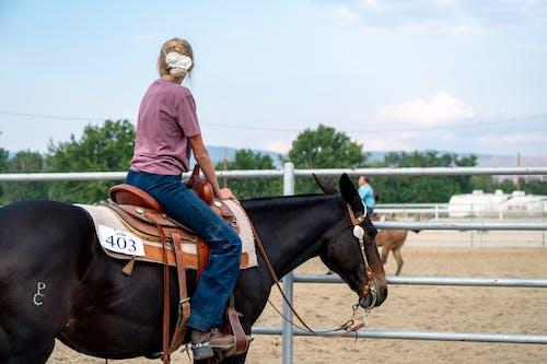 Gratis stockfoto met bestuurder, boerderij, cavalerie