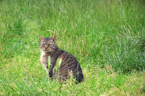 Free stock photo of bored, green grass, indifferent, kitty
