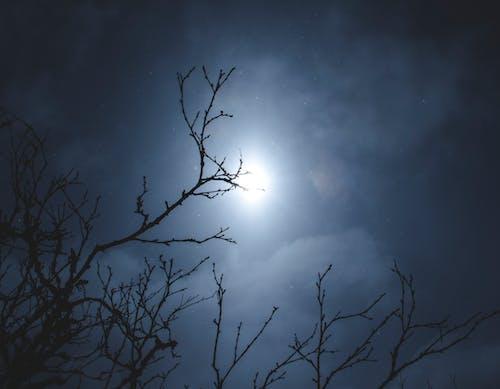 Kostenloses Stock Foto zu baum, bewölkt, nacht, nacht lichter