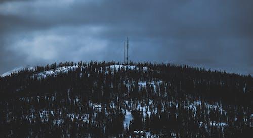 Imagine de stoc gratuită din arbori, cer, cer înnorat, cer noros