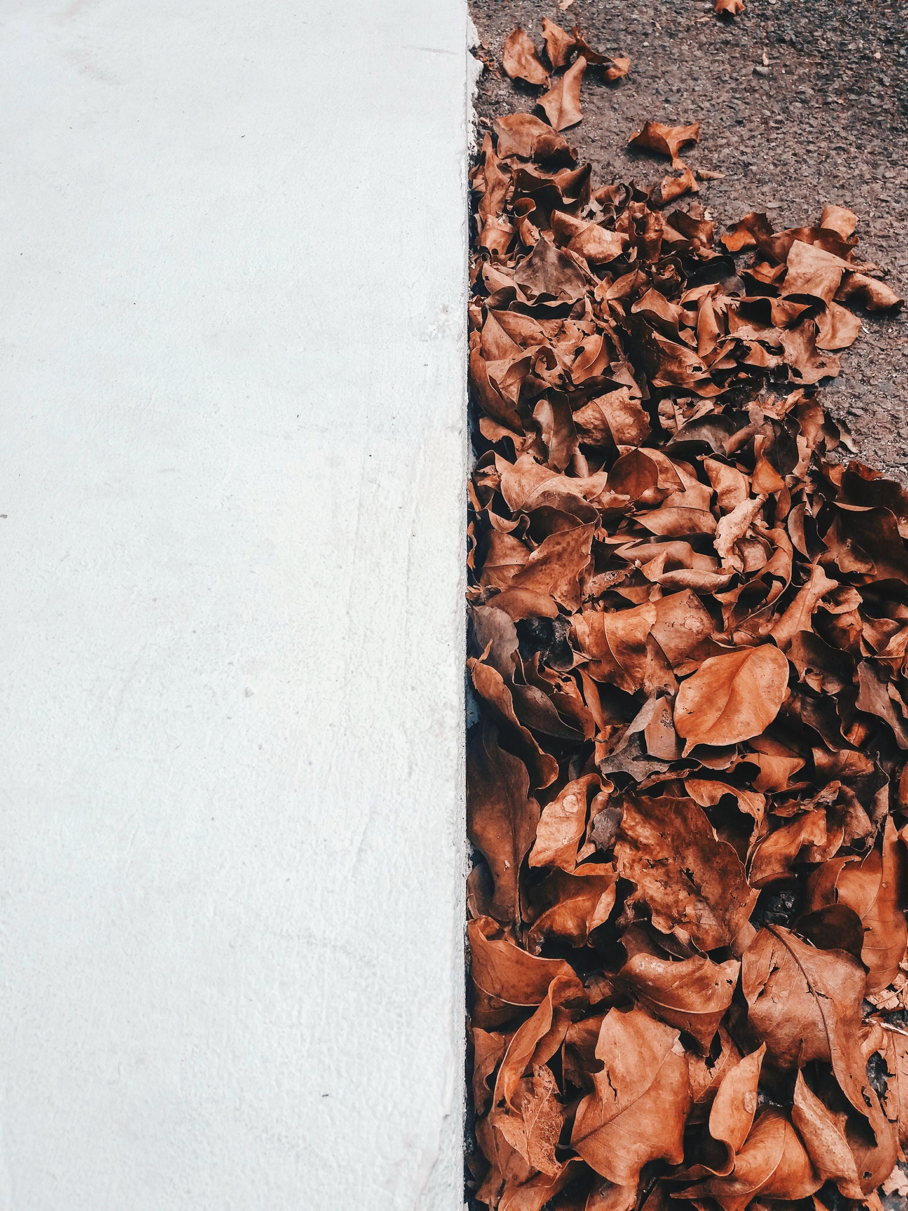 Dried Leaves Near White Concrete Wall