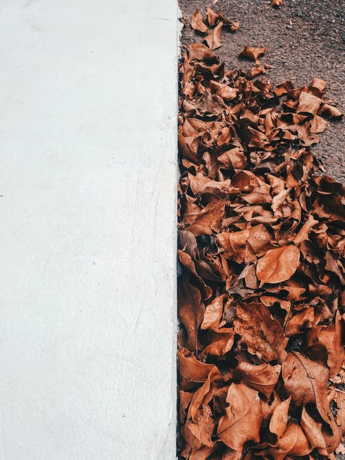 ドライ, バックグラウンド, 乾いた葉, 色の無料の写真素材