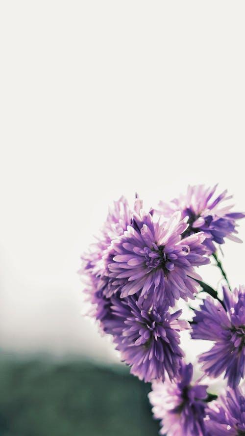 Ảnh lưu trữ miễn phí về bầu trời, cành cây, hoa, màu tím