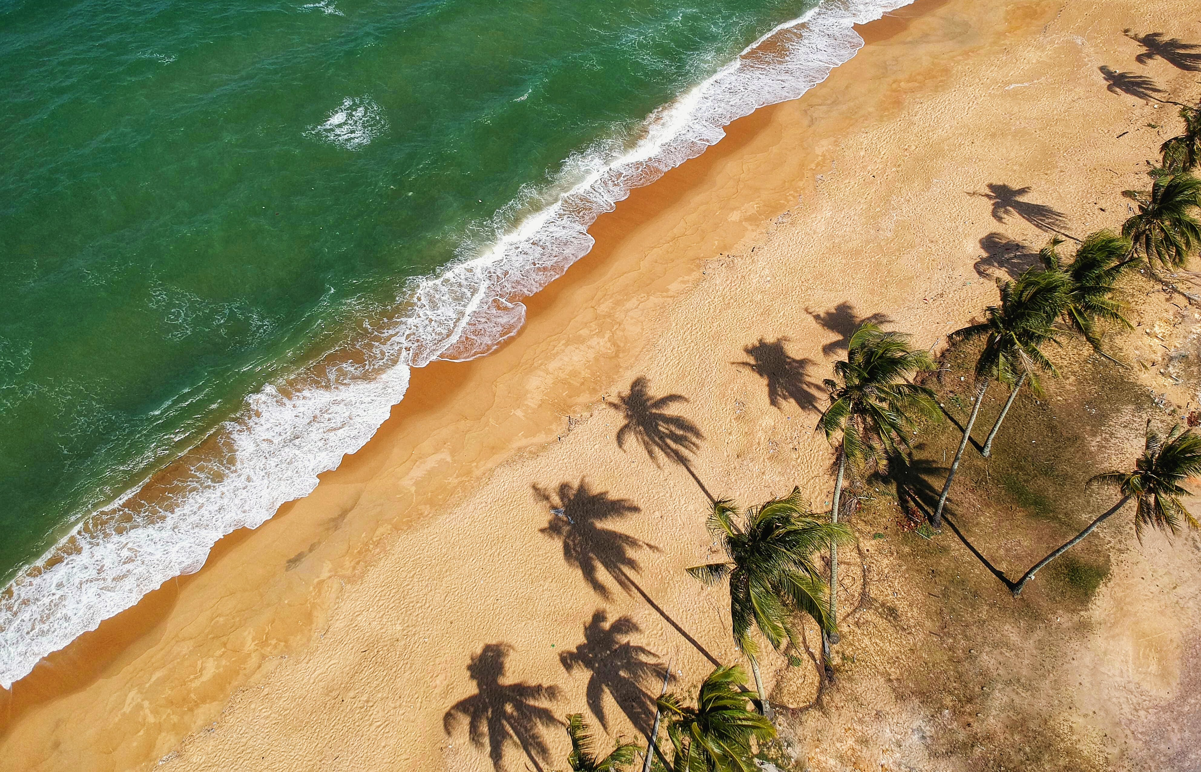 Aerial Photo of Beige With Coconut Trees