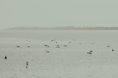 Fotos de stock gratuitas de agua, animales, aves acuáticas