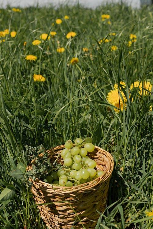 Immagine gratuita di cesto di frutta, cibo, concentrarsi sulle conoscenze acquisite
