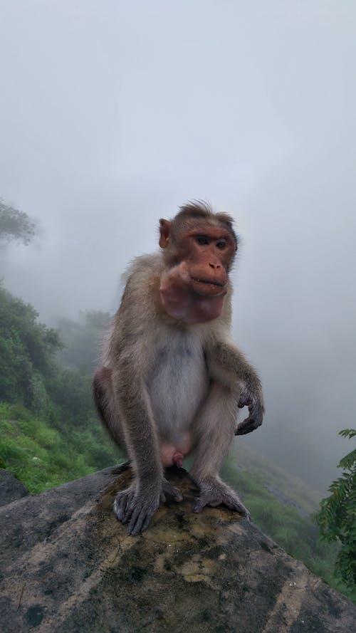 Fotos de stock gratuitas de mono, mono sentado