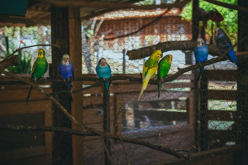Free stock photo of birds, poultry