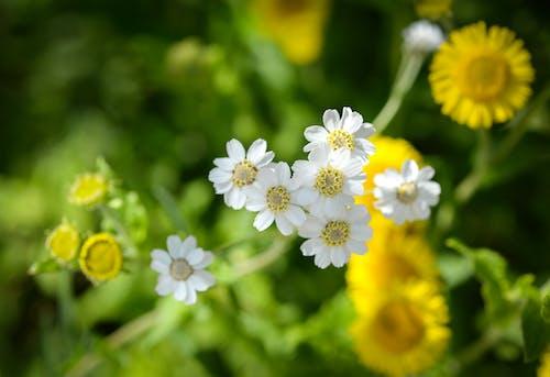 Gratis stockfoto met bloeien, bloemblaadje, bloemblaadjes, bloemen