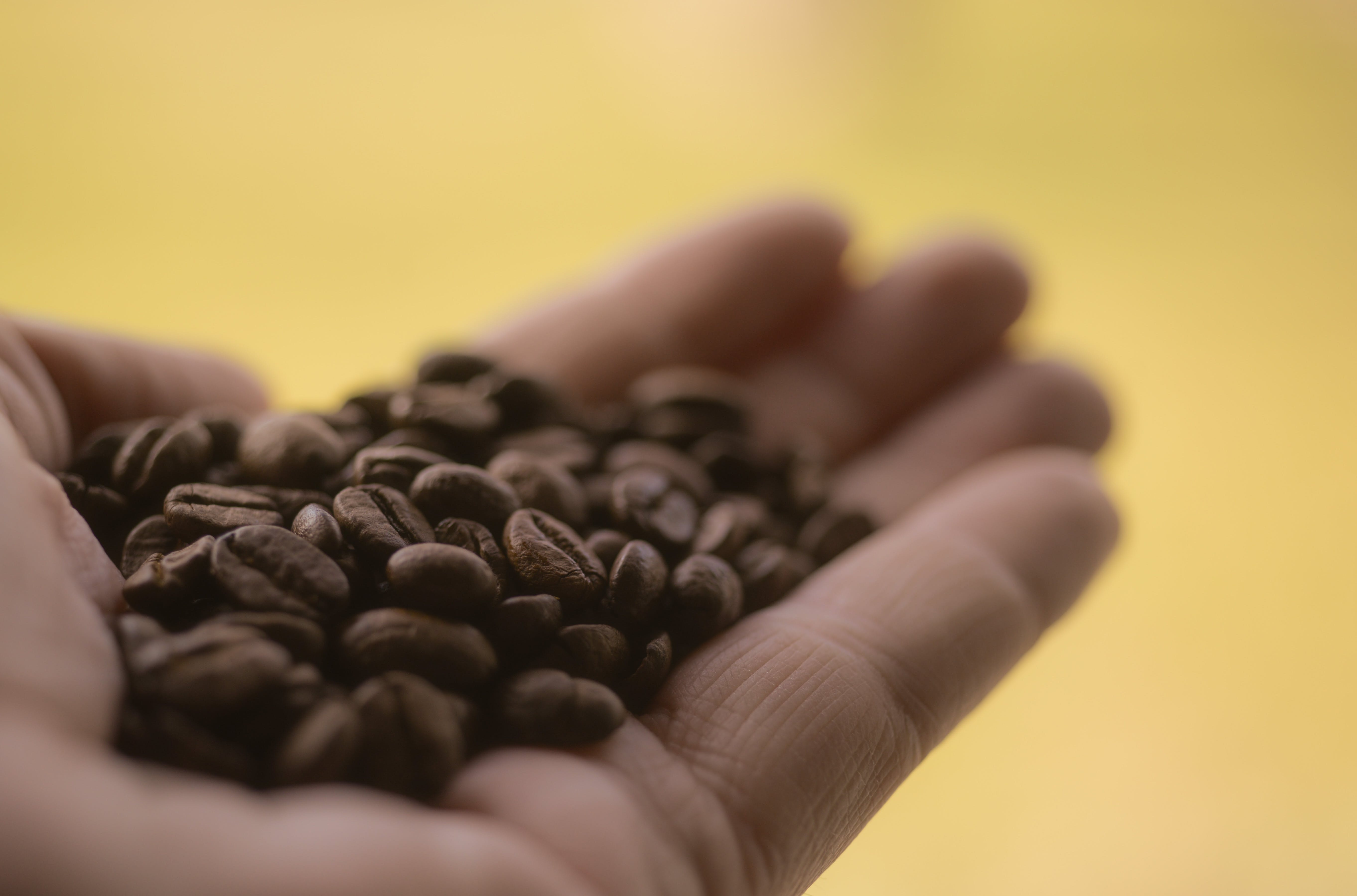 Coffee Beans On Person's Palm