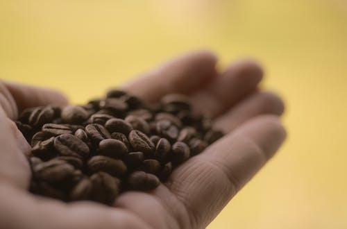 Základová fotografie zdarma na téma aroma, hloubka ostrosti, káva, kávová zrna