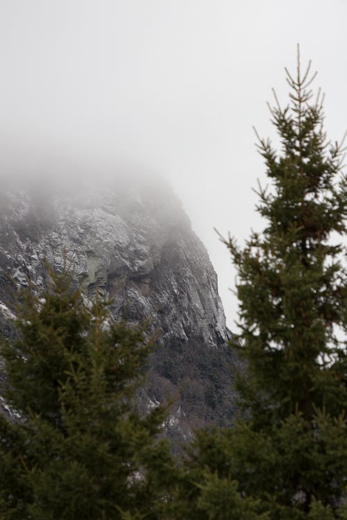 Ingyenes stockfotó fák, festői, hegy, köd témában