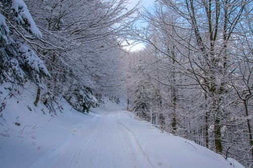 Darmowe zdjęcie z galerii z biały, droga, drzewa, gałęzie