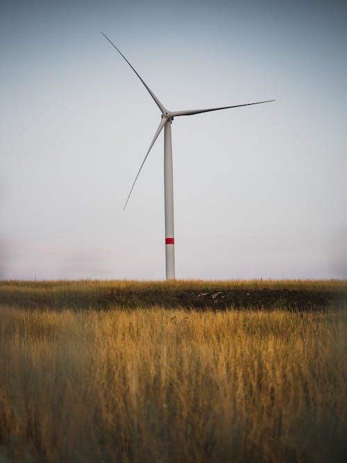 Foto profissional grátis de campo de grama, energia alternativa, energia eólica