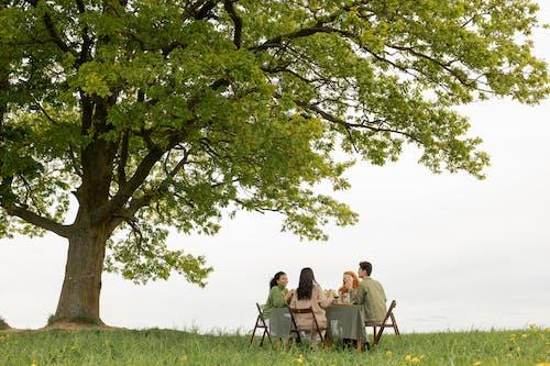 Безкоштовне стокове фото на тему «бенкет, відпустка, Деревина»
