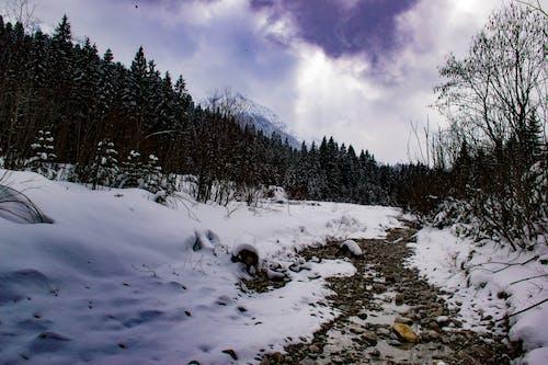 樹木, 白雪皚皚的山, 防波堤, 雪 的 免費圖庫相片