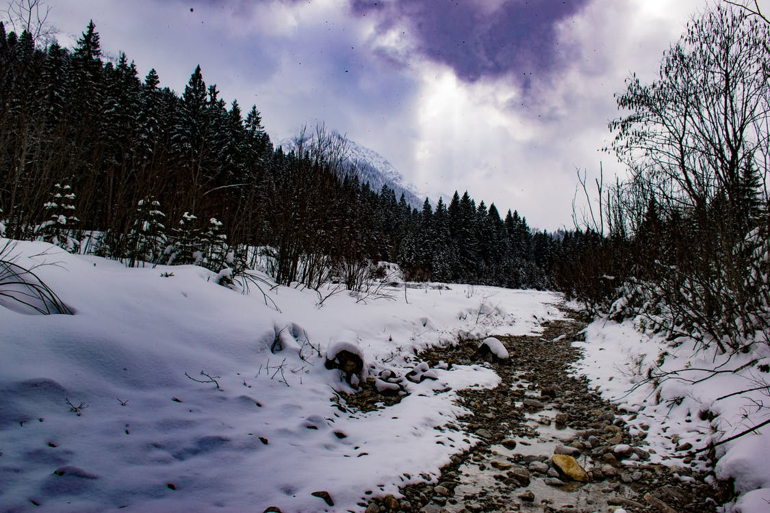 fák, havas, havas csúcsok