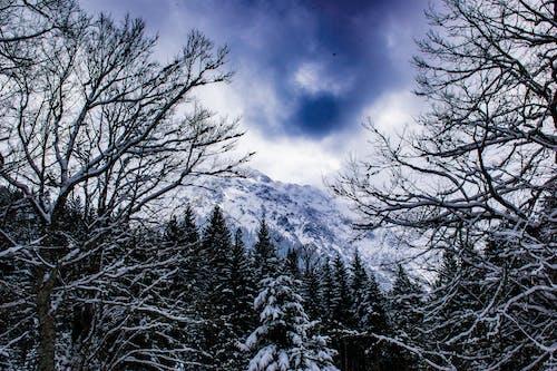 Gratis lagerfoto af bayern, ettal, sne, snefnug