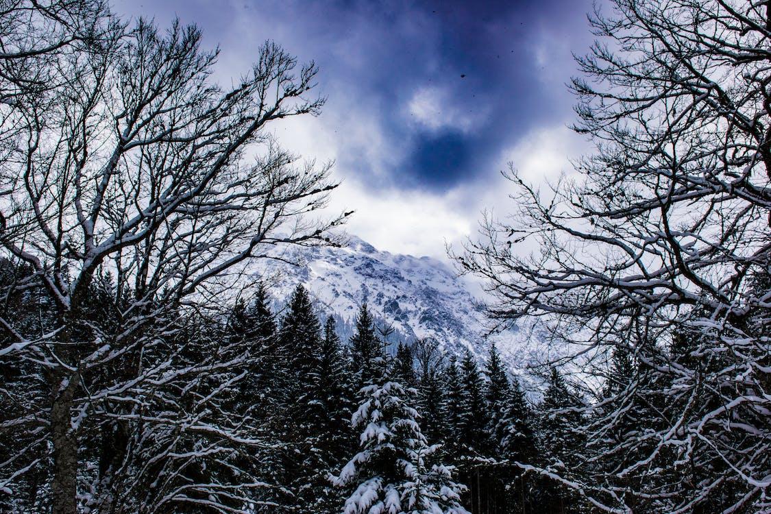 Alemanha, bayern, coberto de neve
