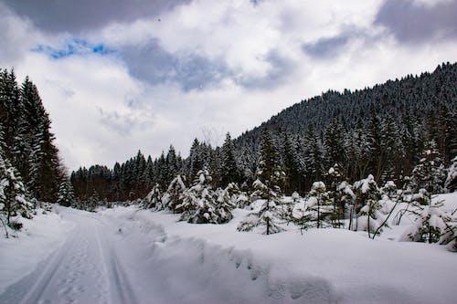 Δωρεάν στοκ φωτογραφιών με ettal, Γερμανία, δέντρα, καιρός