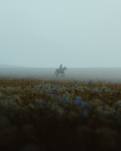 Person Riding Horse on Green Grass Field
