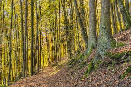 Бесплатное стоковое фото с деревья, живописный, лес, окружающая среда