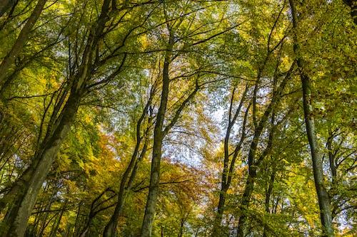 ağaçlar, bakış açısı, dallar, dar açılı çekim içeren Ücretsiz stok fotoğraf