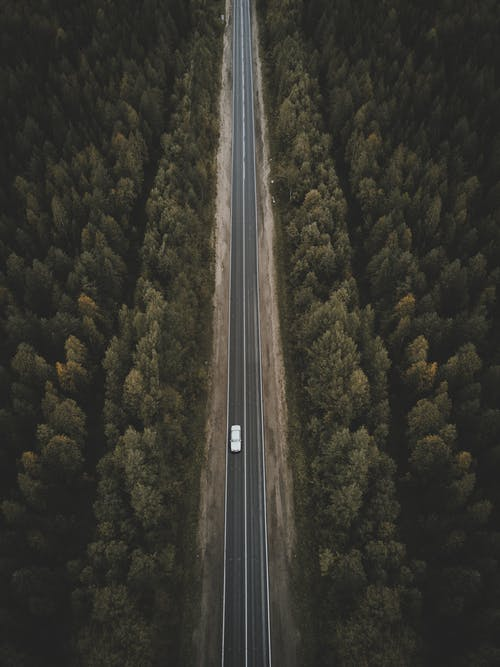 Aerial View of Gray Road in the Middle of Green Trees