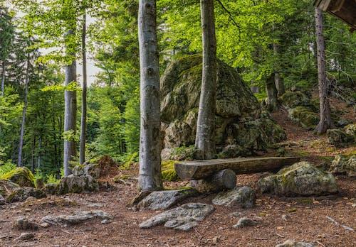 Imagine de stoc gratuită din arbori, bancă, codru, mediu