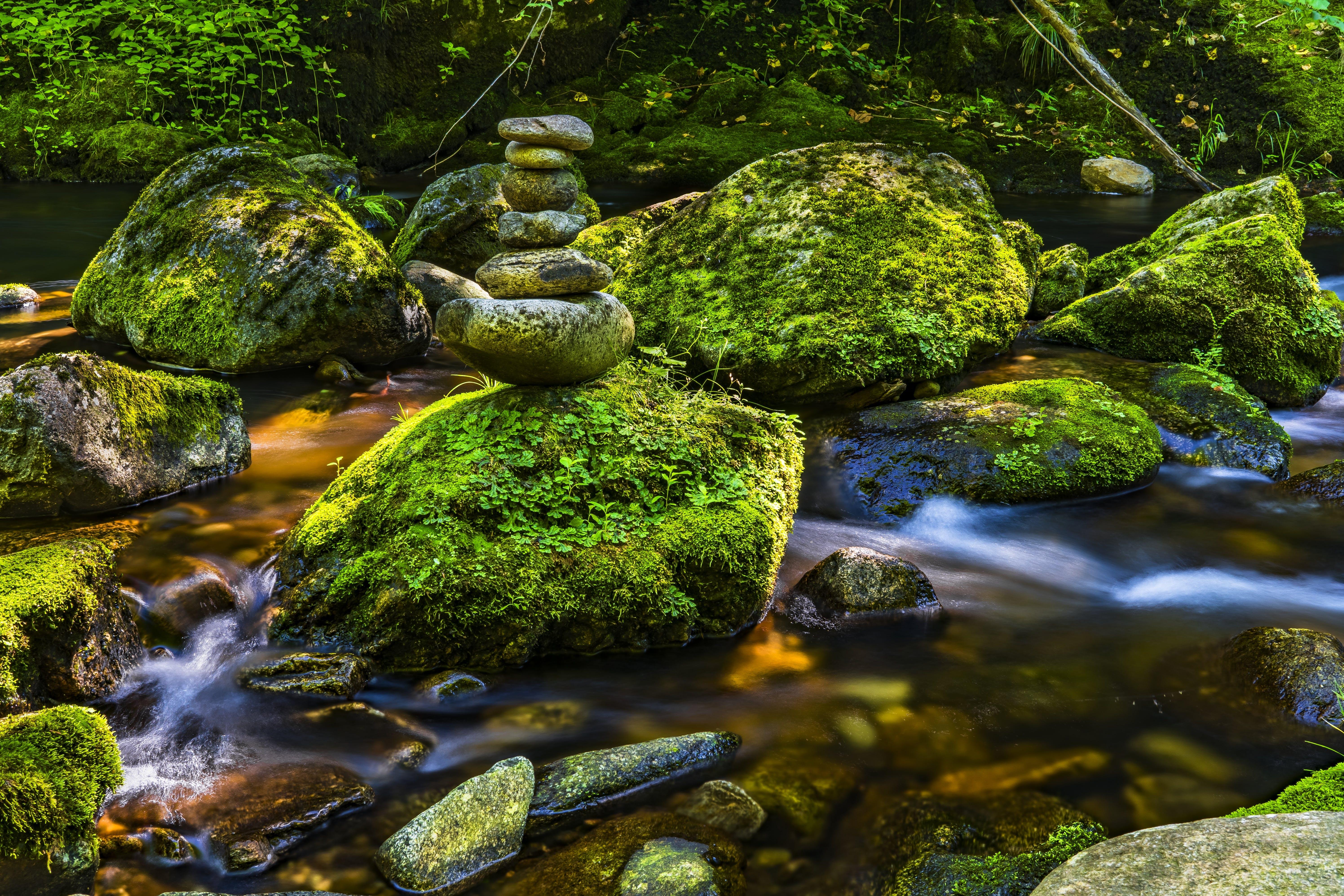 Základová fotografie zdarma na téma kameny, mech, proud, tok