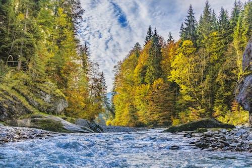 Foto d'estoc gratuïta de aigua, arbres, Baviera, Fons de pantalla HD