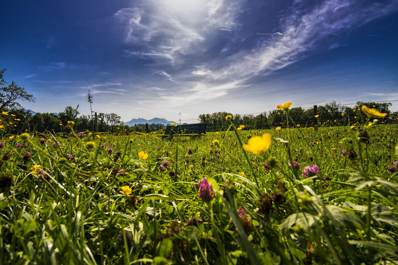 panorama-grass-bank-bench-958021.jpeg