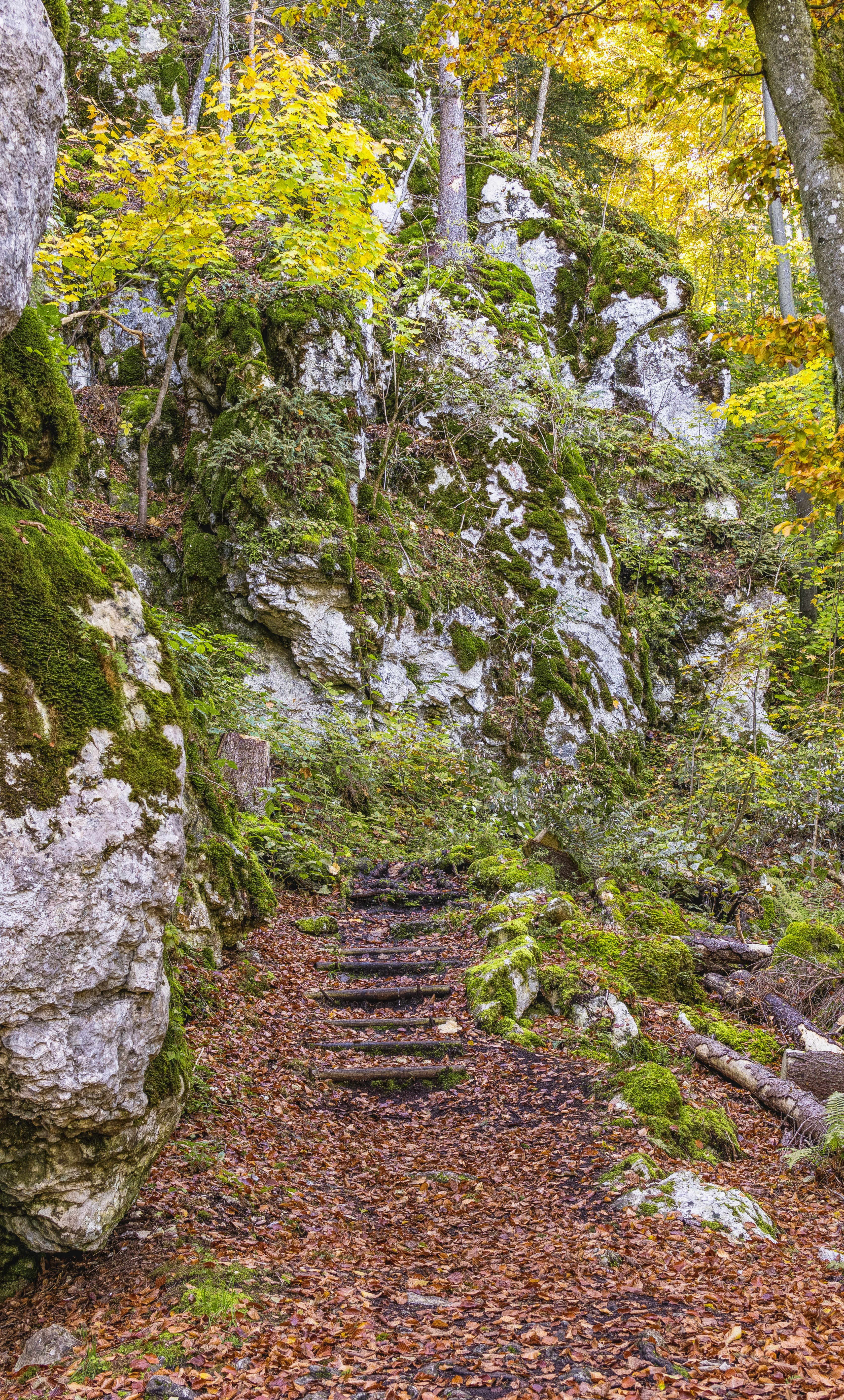 Free stock photo of stairs, nature, forest, hiking