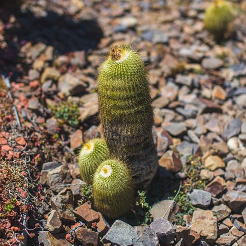 Green Cactus on Brown and White Stones