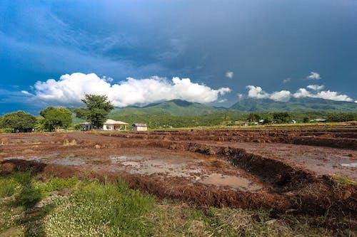 Immagine gratuita di acqua, alberi, campo, case